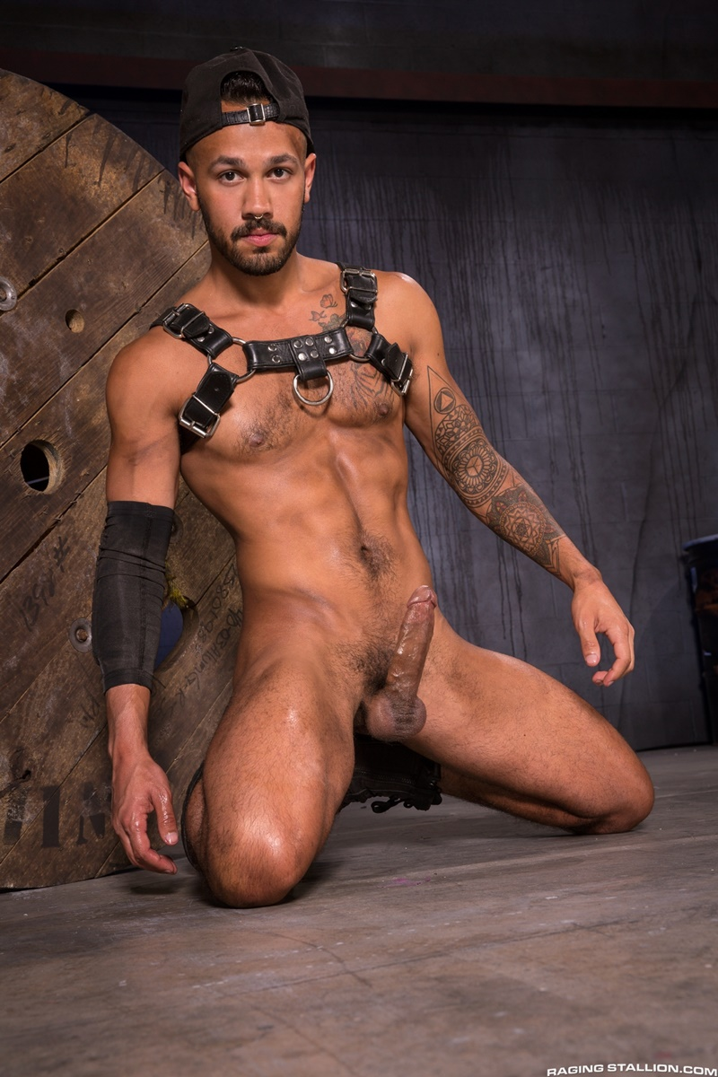 Myles Landon Grabs Talon Reeds Leather Harness Driving -8715